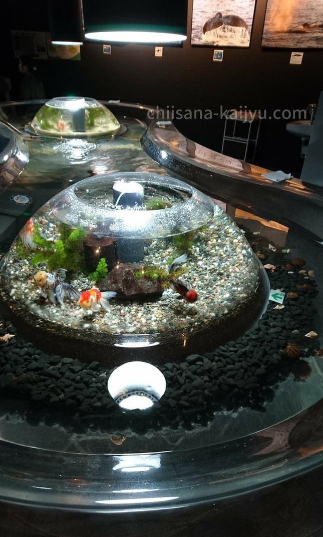 くしろ水族館「ぷくぷく」 金魚の水槽