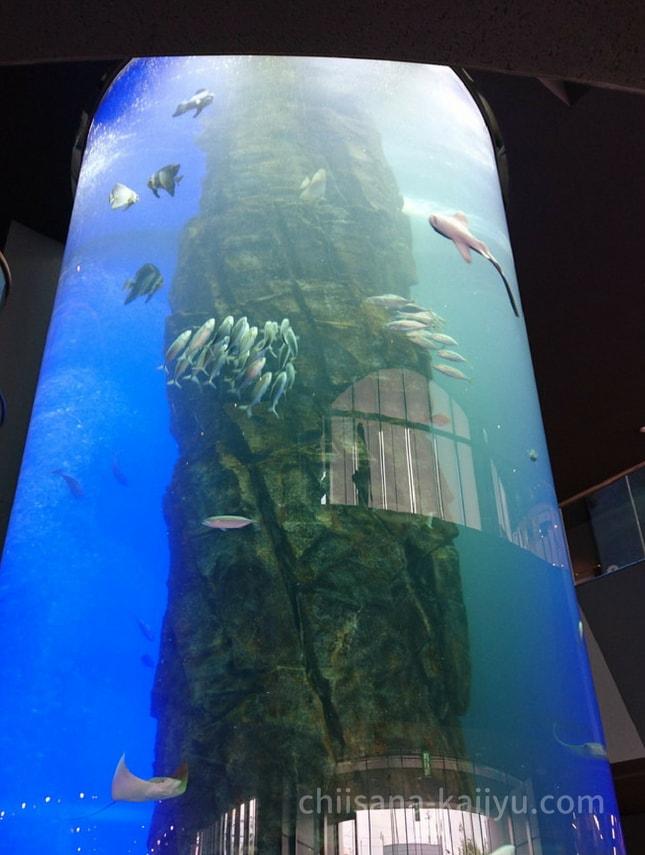 くしろ水族館「ぷくぷく」&釧路「釧之助」本店の入り口にある巨大水槽