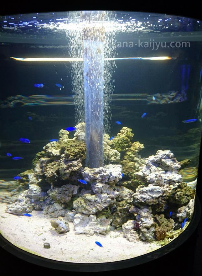 くしろ水族館「ぷくぷく」 青い魚の水槽